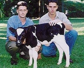 cow-clone3