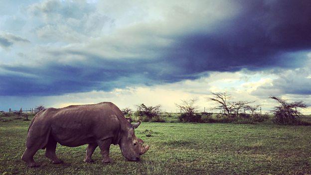 Sudan-laaste-noordelike-witrenoster-bul-op-aarde-foto-OPC-